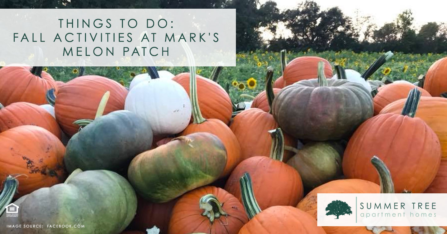 Things to Do: Fall Activities at Mark's Melon Patch